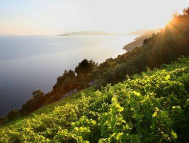 Vinska tura i degustacija vina na Pelješcu